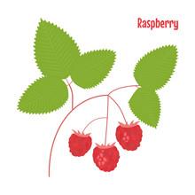Raspberry. Isolated Wild Berries On White Background.