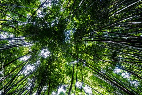 Printed kitchen splashbacks Khaki Dense bamboo forest at the Pipiwai trail