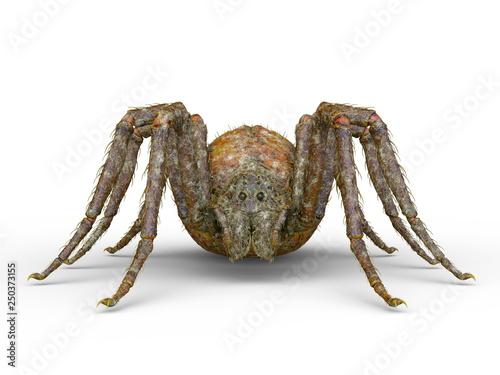 Cuadros en Lienzo 蜘蛛