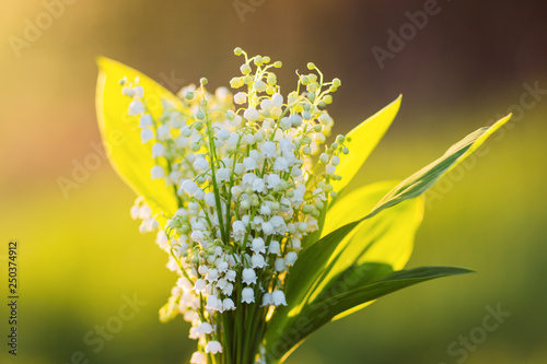 Poster Muguet de mai bouquet of lilies of the valley in the contrasting light of the setting sun. flowers at sunset