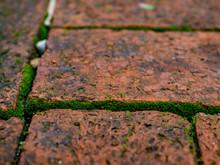 Closeup Green Moss On The Ground
