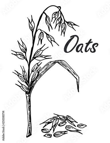 Oats Sketch Hand Drawn Set Of Oats Oatmeal Oat Grain