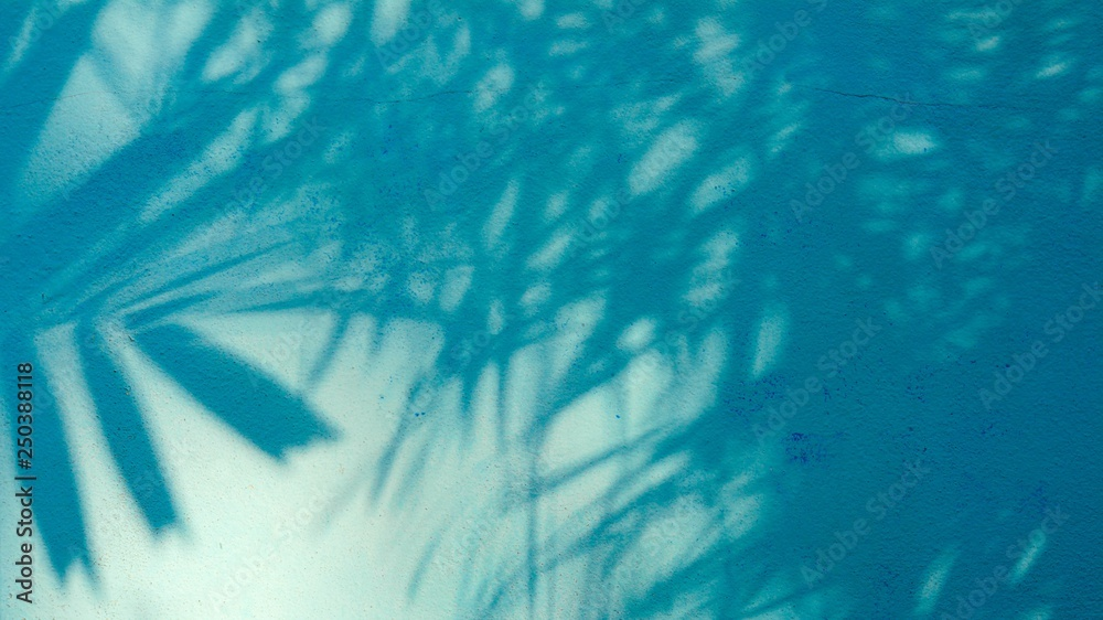 Fototapety, obrazy: palm leaves shadow on blue cement wall