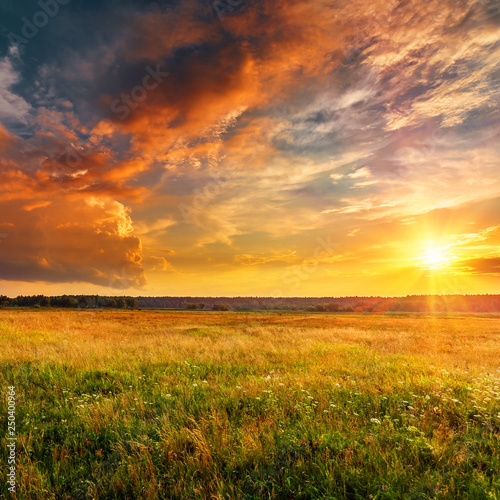 Foto auf Leinwand Honig Sunset landscape with a plain wild grass field and a forest on background.