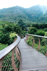 Fototapeta Optyczne powiększenie Treetop Canopy Walkway at Kirstenbosch Botanic Garden | Aerial Boardwalk from which you can view Table Mountain in Cape Town, South Africa