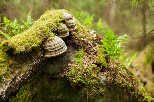 Polypore growing on tree trunk Canvas-taulu