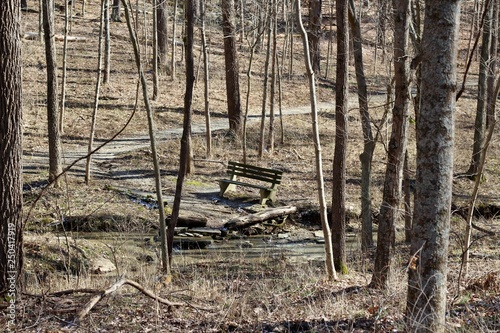 A old wood park bench in the bare tree forest.