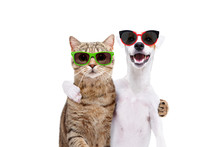 Portrait Of A Dog Jack Russell Terrier And Cat Scottish Straight In Sunglasses Hugging Each Other Isolated On White Background
