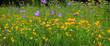Blühende Blumenwiese im Sommer, Panorama