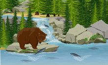 A Grizzly Brown Bear Catches P...