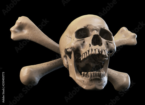 Photo  Human skull on Rich Colors a White Isolated Background