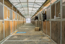 Horses In The Stable Waiting For Their Master