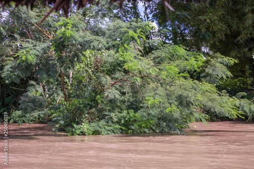 Fotobehang Olijf Branch in Amazon river