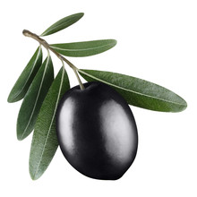 Single Black Olive With Leaves, Isolated On White Background