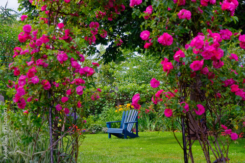 Blue Adirondack chair in the backyard garden, framed by a rose arbor Wallpaper Mural