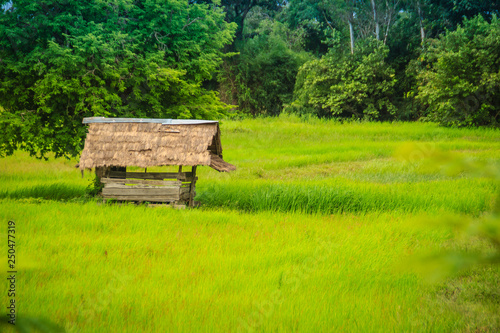 Foto  A peaceful cottage on rice farm with green background