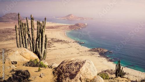 Photo  Coast of Pan de Azucar National Park in Chile
