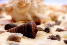 Seashells In The Sand