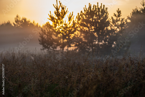 Recess Fitting Deep brown colorful sunrise sunset in misty summer meadow