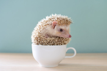 Cute hedgehog on a cup