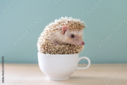 Photo  Cute hedgehog on a cup