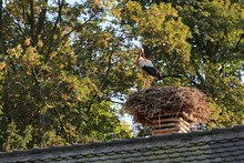 Stork On Her Nest On Top Of A ...
