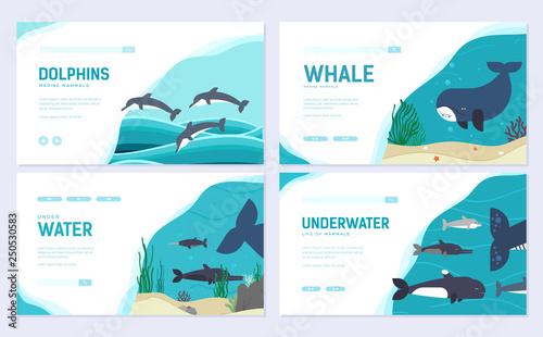 Fotografie, Obraz  Set of Sea mammals