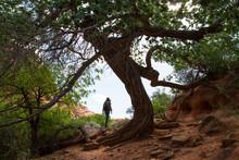 Rear View Of Woman Hiking Agai...