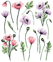 Flowers Poppies Set, Watercolor Painting For Greeting Card, Wedding Invitation, Summer Wed Design, Holiday Decoration. Isolated On White Background.