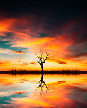 Tree And Reflection In Lake With Epic Sunset