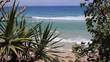 tropical beach with palm trees ocean summer wave scenery landscape Australia Coolangatta