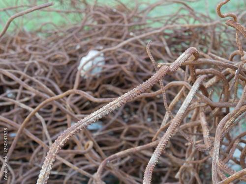 Fotografia  La ferraille et le béton