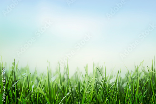 Photo sur Toile Herbe green grass and blue sky background