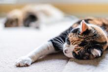 Closeup Of Two Cat Friends Fac...