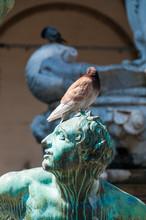 Pidgeon Sitting On A Statue