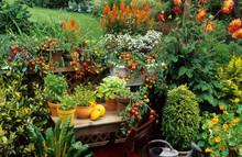 Légumes Et Plantes Aromatiques Sur Un Balcon