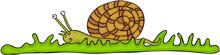 Cute Snail On Green Grass