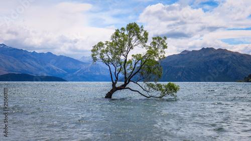 In de dag Bomen That Wanaka Tree in New-Zealand