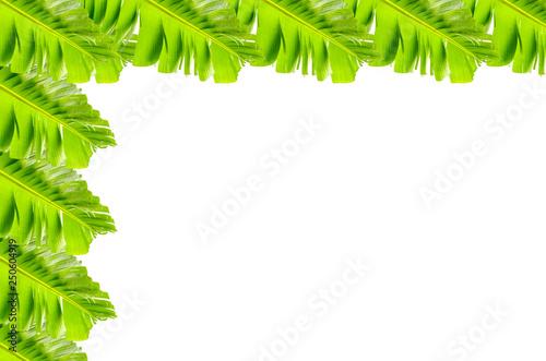 Fotografía  Bordure de feuilles de bananier