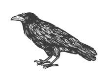 Crow With Three Eyes Sketch En...