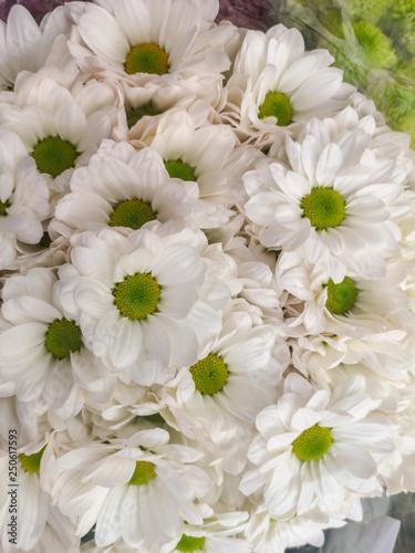 Chrysanthemum flowers bouquet. #250617593