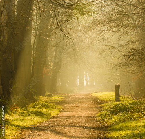 Fototapeten Wald Sunrise on the path
