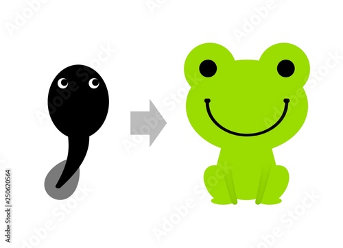 Fotografie, Obraz  オタマジャクシからカエルへ成長
