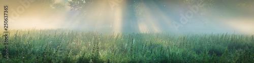 Leinwand Poster Sonnenaufgang auf einem Feld mit Baum im Nebel