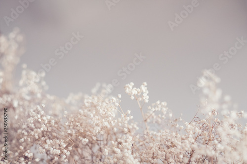 Photo sur Toile Fleur Floral pattern design. Dry grass decor. Copy space on beige color background.