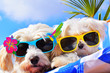 canvas print picture - funny dogs with sunglasses