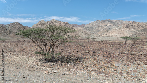 Foto Trees in arid mountains