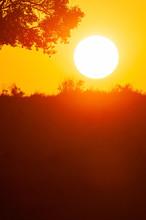 Glowing Sun Setting Behind A Grassland.