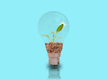 Small Seedlings In Two Bulbs On A Blue Background With Energy-saving Concepts To Protect The Environment.