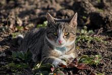 Cat In Portrait On A Field